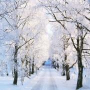 snowy-trees12